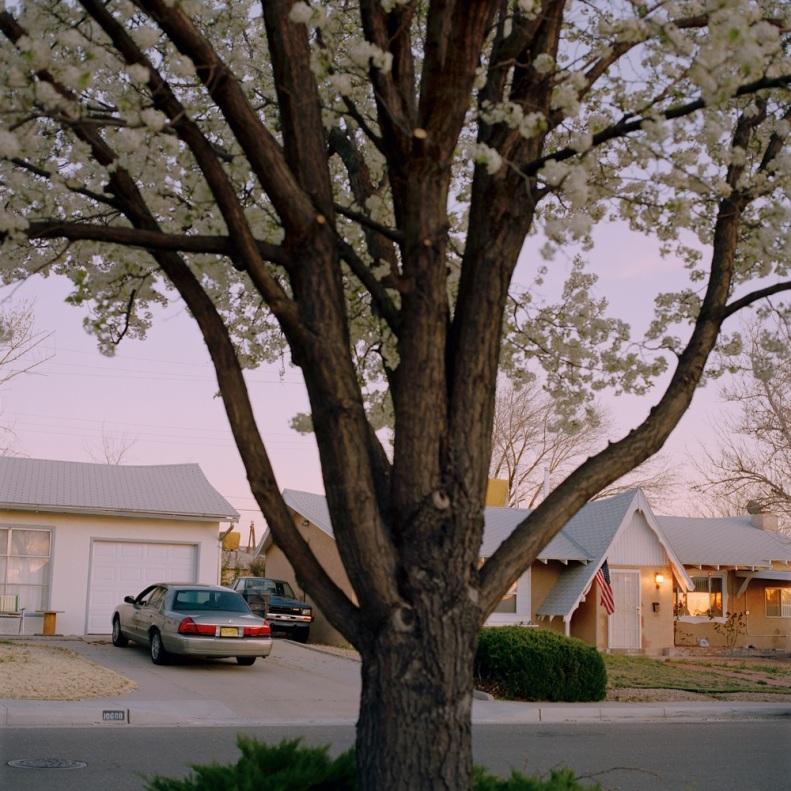 Pear Tree 001